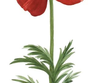 Red Poppy 2z Original Watercolor by Wanda's Watercolors
