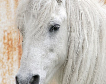 white horse / white pony greeting card - set of 10