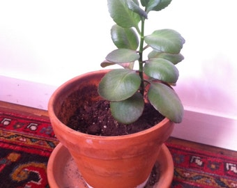 Wedding Decor New Home Moving Sale Lovely Plant