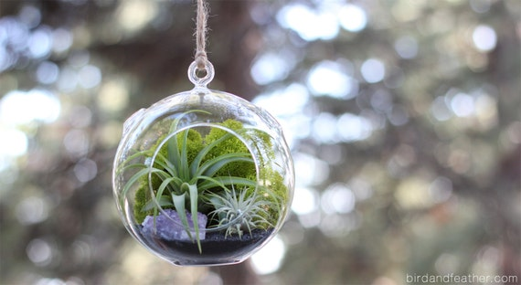 Amethyst Cluster Air Plant Terrarium Kit  || February Birthstone || Large Round Hanging