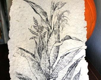 Original Drawing of Corn. Botanical chart. Black and White. Wall Decor. Thanksgiving Decor. Thank you gift. Nursery Artwork