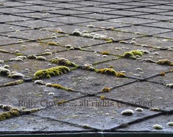 Mossy Roof in Delgany, Co. WICKLOW, IRELAND. Irish Flora, Macro Landscape Photo, Green Velvet Moss on Old Slate Tiles,  Green and Grey Decor