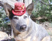 Pet Top Hat- Checkered Red Elegance