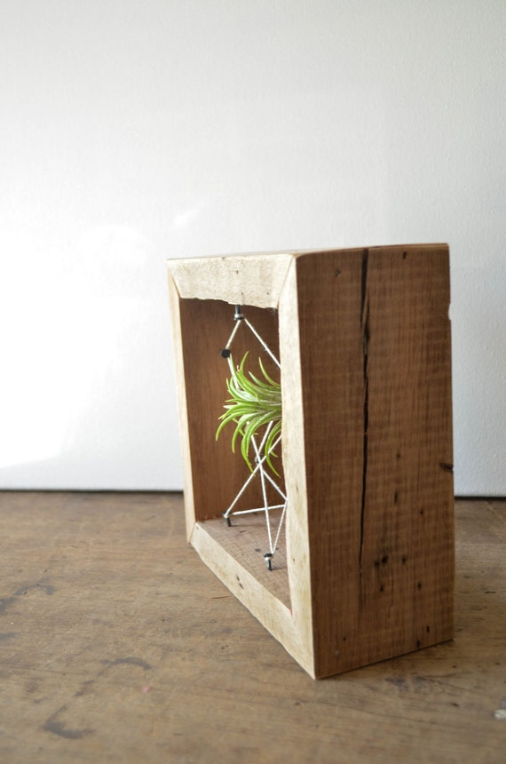 Rustic Reclaimed Recycled salvaged wood AIR PLANT holders. Vase, wall decor, geometric design, terrarium