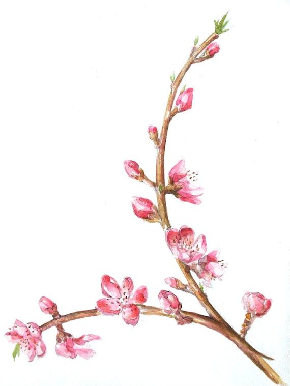 Original Flower Drawing Flowering Peach acrylic on acid