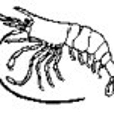 lobsterlu