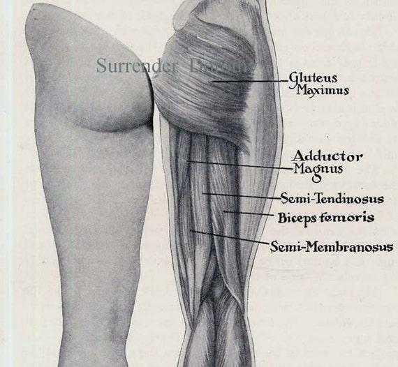 butt muscles diagram   Diarra