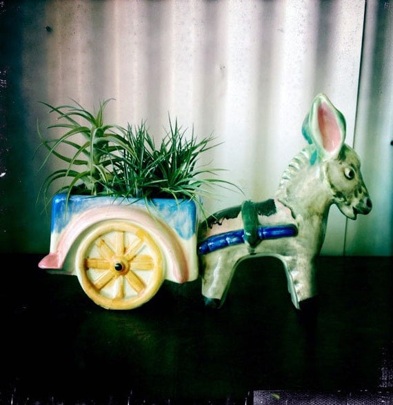 burro garden // air plant // the donkey bouquet