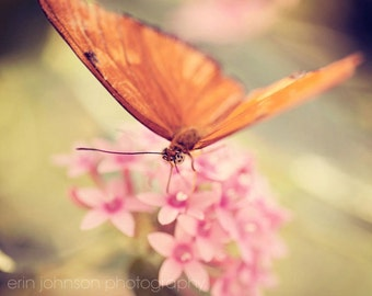 butterfly photography nature photograph orange decor pink decor flower photography nursery art home decor