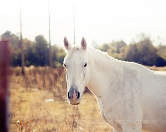 horse photography, white decor, rustic home decor, animal photography, farm decor, rustic cottage, farm photography, Looking at You
