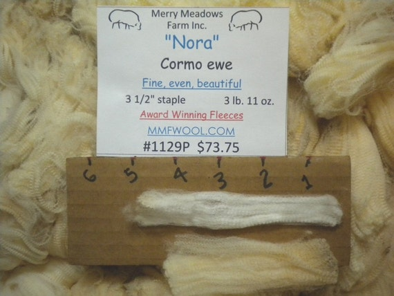 "MMFWOOL 1129P Raw fleece ""Nora"" Purebred Cormo   Very soft and silky with even well defined crimp"
