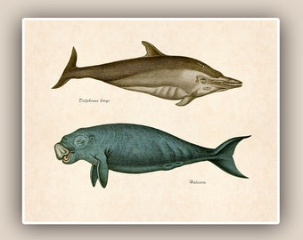 Marine Mammals Print, 10x8 Vintage illustrations, Delphinus and Halicore Mammals  Seashore art  Print, Coastal Living
