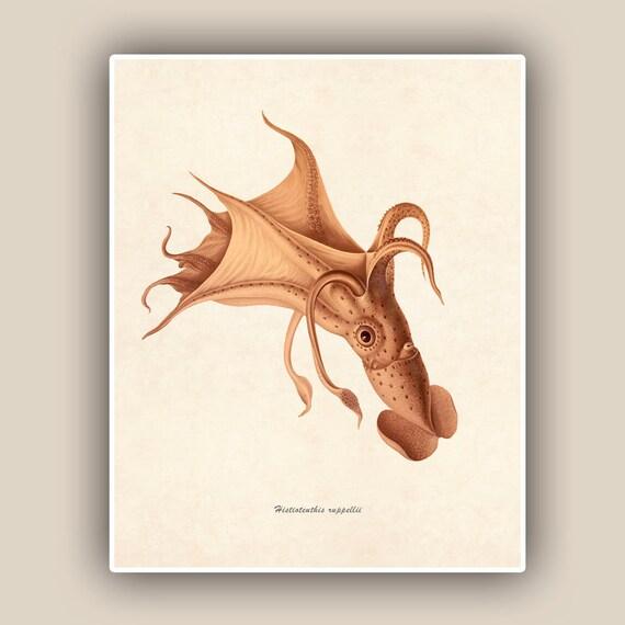 Squid Print 2,  Vintage Umbrella Squid image print,  Marine Wall Decor, Nautical art,  Mixed Media Collage  Print, Coastal Living