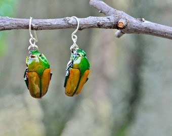 Floating Real Flower Beetle Earrings Green and Gold