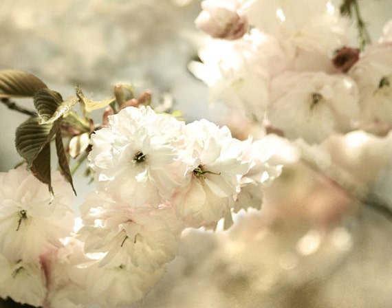 Dreamy photography, white bedroom art,  White Cherry Blossoms Photo, landscape, 11x14 - Sweet Dreams - Photography print