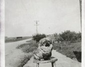 vintage photo Pekingese Dog named PAt sits on Stool