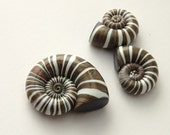 Polymer clay Beads - Faux Seashells - DIY - Metallic Brown and White - Handmade jewelry supplies