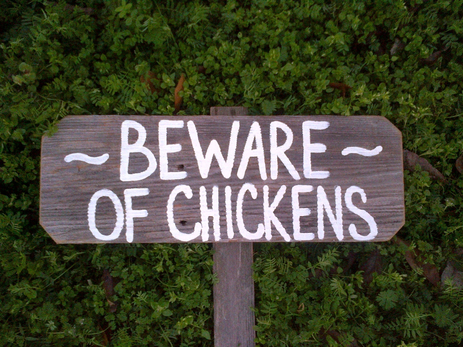 Chicken Funny Signs Quotes: Beware Of Chickens Funny Chicken Sign Farmers Sign Yard