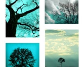 Nature Photography, Aqua,  Tree Photographs, Landscape Photos, - Set of Four (Two 5x5 and Two 5x7 inch) Pictures for interior design.
