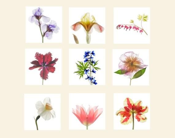 Flower Print Set, Floral Art Prints, Flower Wall Decor, Flower Photography, Tulip, Iris, Peony, Bleeding Heart, Daffodil, Delphinium