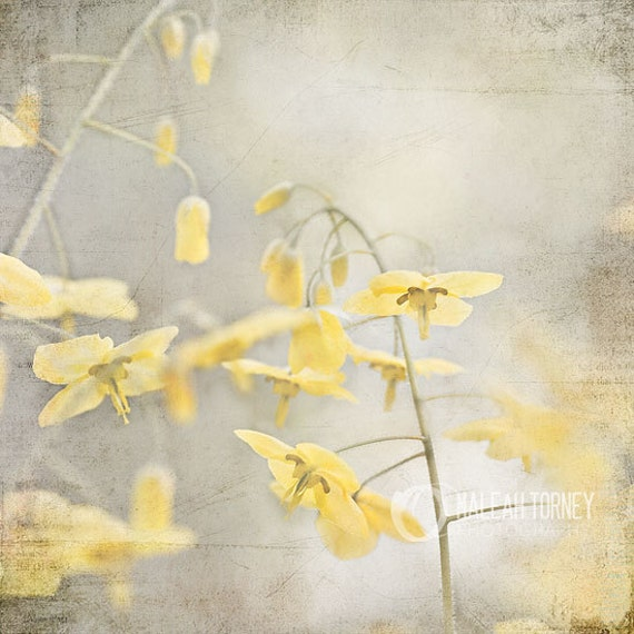 yellow flowers photography yellow grey wall art spring. Black Bedroom Furniture Sets. Home Design Ideas