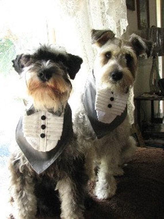 Tuxedo Bandanna Dogs