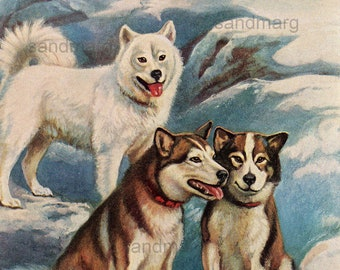 Vintage Double Sided  Dog Illustration Alaskan Malamute Eskimo and Newfoundland