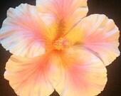 Hibiscus, Hibiscus flower, Hibiscus barrette, Pink, Pink Hibiscus, Hair, Hair Flower, Pink flower, Pin up, Wedding, Hair clip