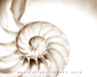 Nautilus Shell Swirl Cream Colored Art Nature Mathematic Wall Art Sepia Home Decor -  Pearl Nautilus Fine Art Photograph by Sarah McTernen