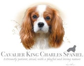 CAVALIER KING CHARLES Spaniel dog fabric  - Large Picture on One Fat Quarter Fabric Panel for Quilting and Sewing