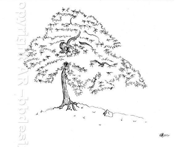Maple Tree Drawing to Japanese Maple Tree