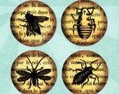 INSECTS ON BOOKS Digital Collage Sheet 1.5in or 1in Circles - no. 0109