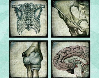 Digital Collage Sheet MEDICAL DIAGRAMS 1.5in or 1in Squares Skeletons Organs Brains - no. 0002