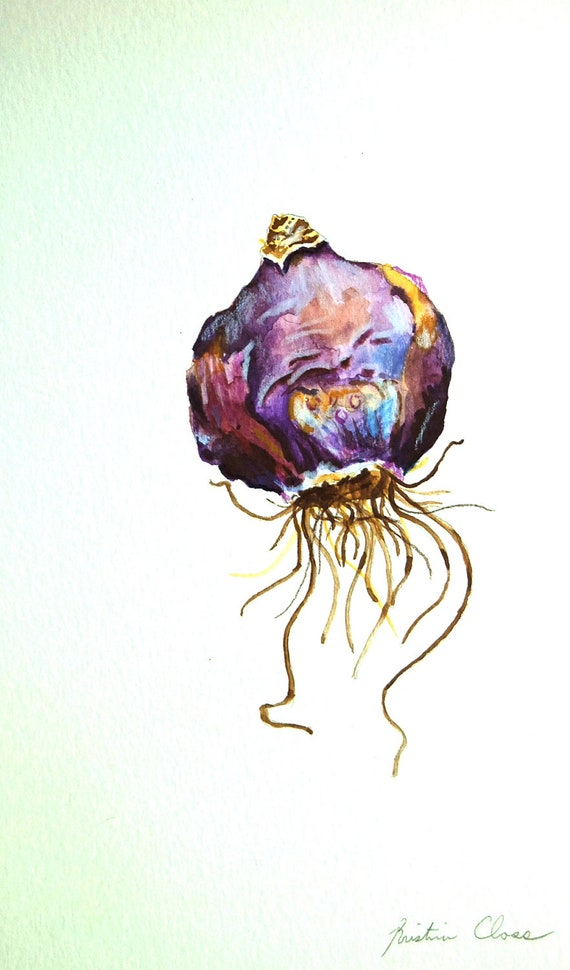 Original Watercolor-  Hyacinth Bulb Study 2