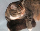 Catnip Cat Toy / Brown Mink Recycled Fur