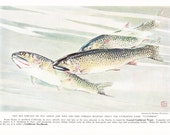 1937 Fish Print - Coastal Cutthroat Trout - Vintage Antique Nature Science Animal Art Illustration Cabin Cottage Home Decor for Framing