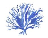 Sea Coral Print