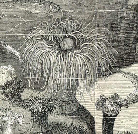 1894 German Antique Engraving of a Seawater Aquarium