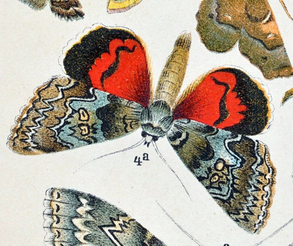 1887 Antique Chromolithograph of Butterflies and Moths. Plate No. 14