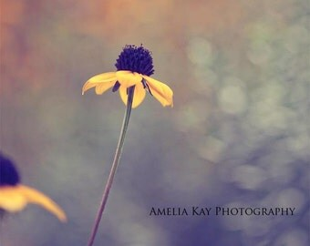Flower Photograph - I'm Falling In Love - fall autumn daisy black yellow green olive dark simple nature macro sage 5x5