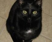 Custom Pet Portrait of JET for Margaret P