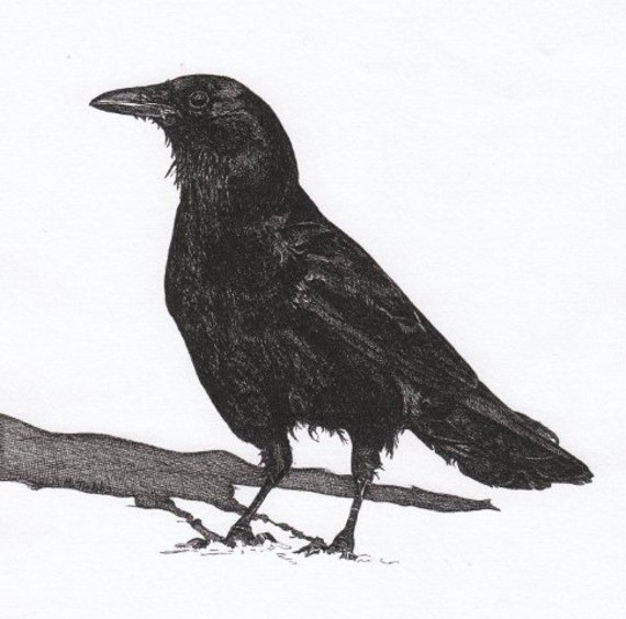 Crow Pen and Ink Drawing Note Cards Stationery