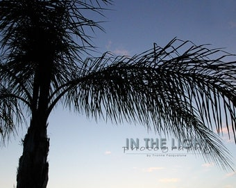 READY To SHIP - Palm Tree Sunset 3 - Treasure Island FL - Fine Art Photograpy - 5x5, 8x8, other sizes available - fPOE