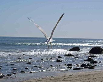 Malibu Beach with a flying visitor