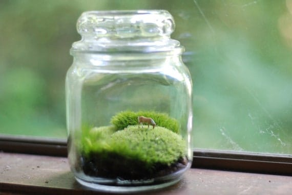 miniature landscape with wee grazing horse