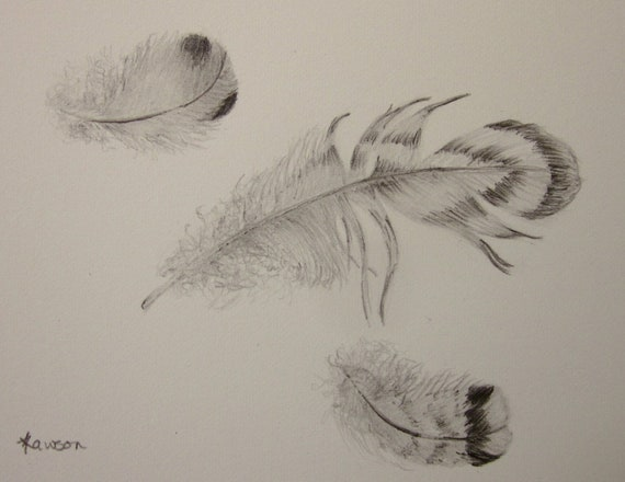 3 soft feathers -- original pencil drawing