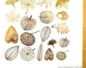 Leaf Skeleton Decals for Ceramic, Glass and Enamel