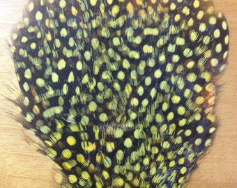 Yellow guinea hen feather pad for Crafts/Costume/Sewing/headband