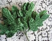 Velvet Leaves Oak Style set of 12
