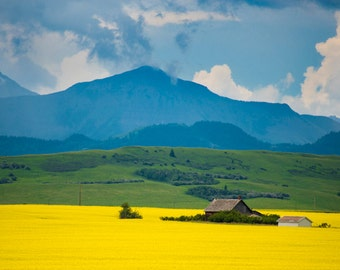 Alberta Canada Photo, Yellow Canola Fields Landscape Photography Farm Flowers Canadian Rockies Mountains can5